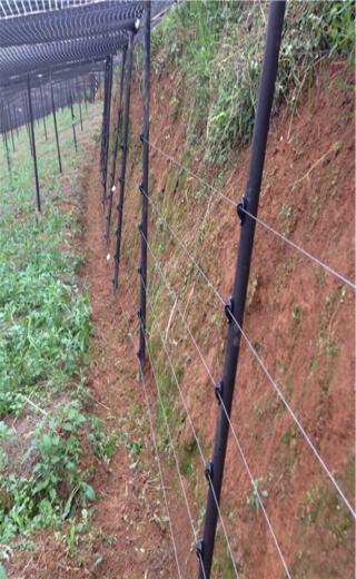 文山文山某三七种植基地案例图片